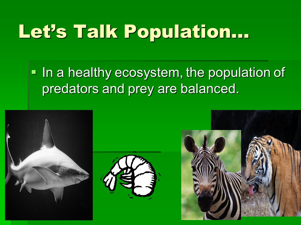 Let's Talk Population…  In a healthy ecosystem, the population of predators and prey are balanced.
