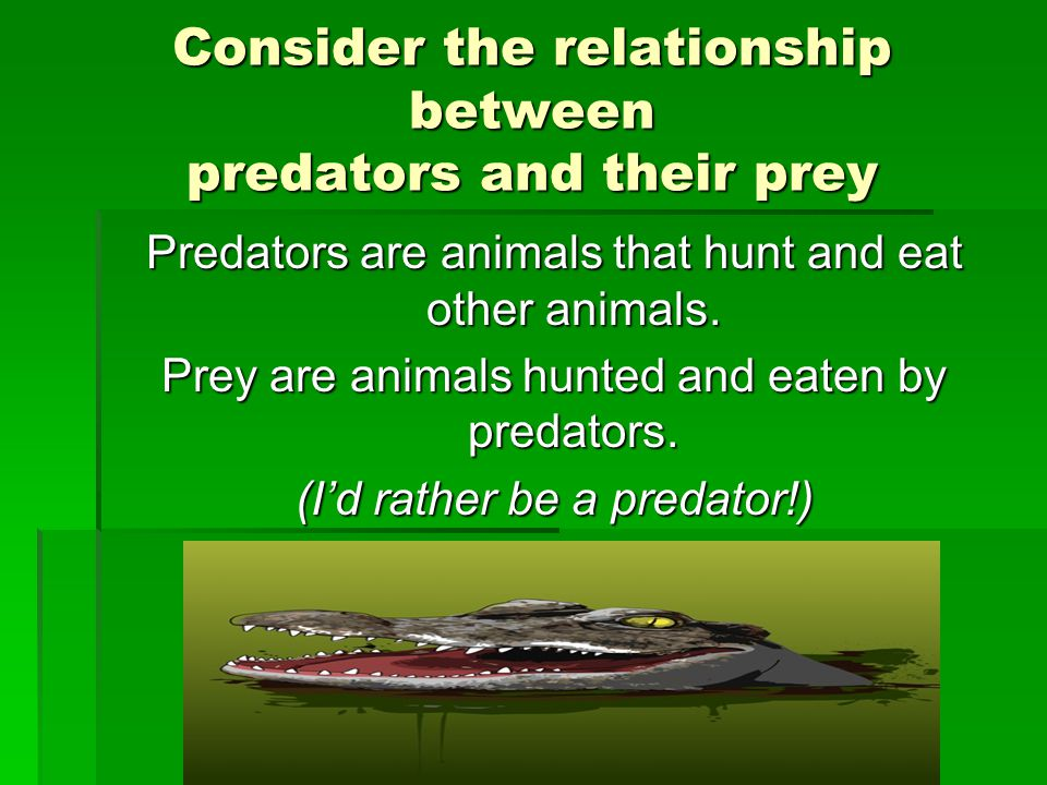 Consider the relationship between predators and their prey Predators are animals that hunt and eat other animals.