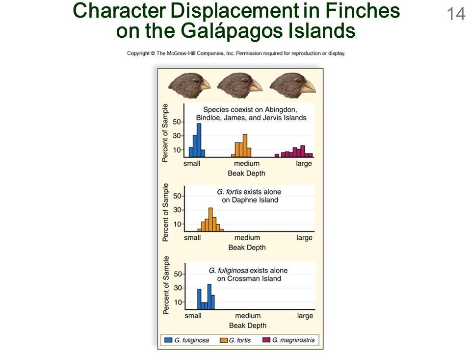 14 Character Displacement in Finches on the Galápagos Islands