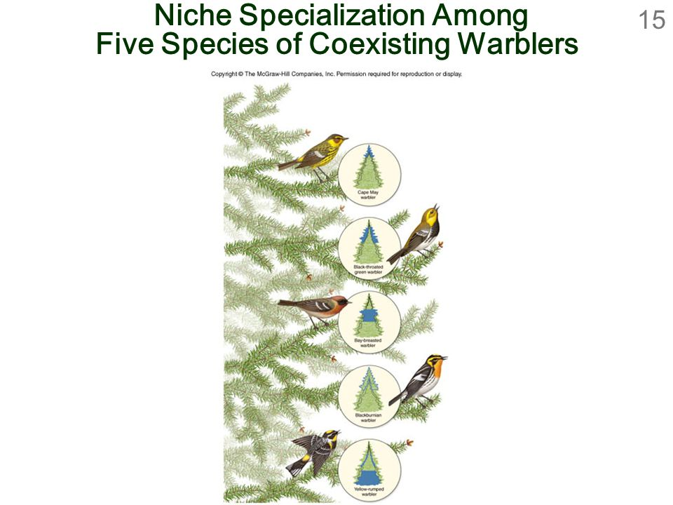 15 Niche Specialization Among Five Species of Coexisting Warblers