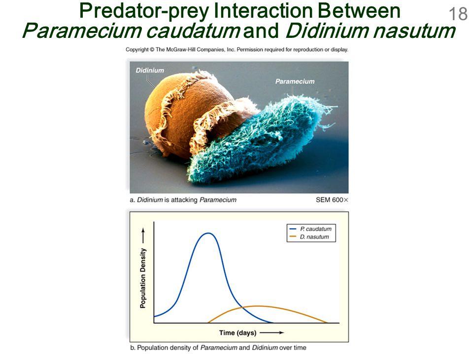 18 Predator-prey Interaction Between Paramecium caudatum and Didinium nasutum