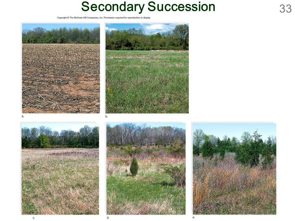 33 Secondary Succession