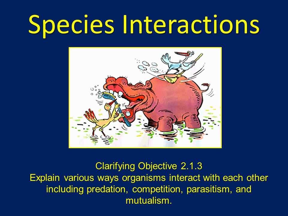 Species Interactions Clarifying Objective 2.1.3 Explain various ways organisms interact with each other including predation, competition, parasitism,