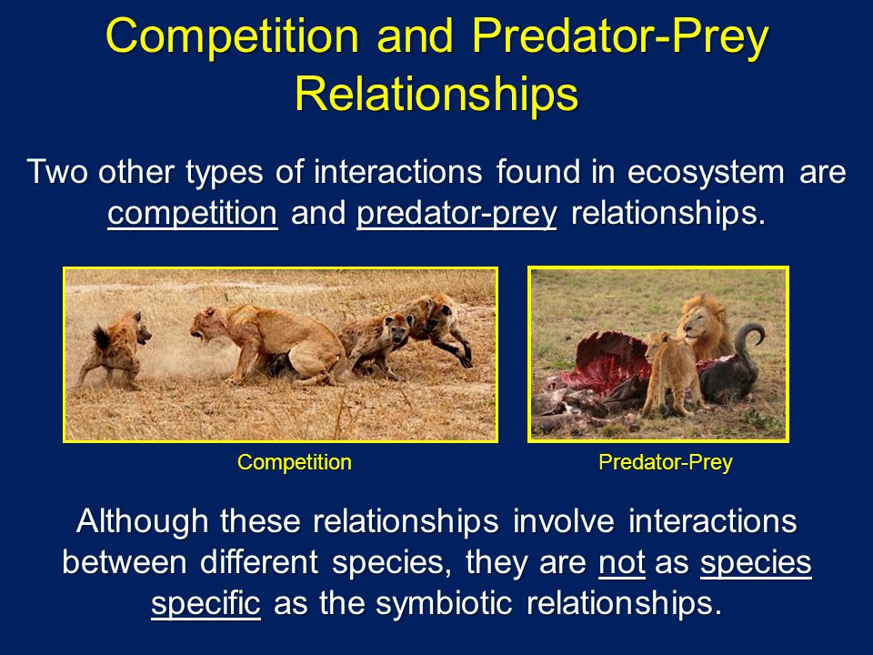 Competition and Predator-Prey Relationships Two other types of interactions found in ecosystem are competition and predator-prey relationships.