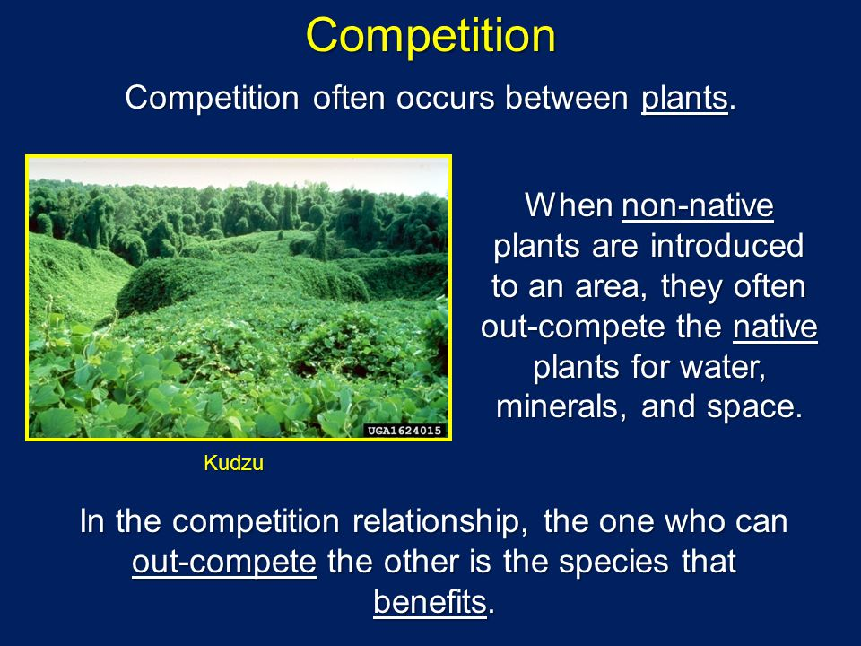 Competition Competition often occurs between plants.
