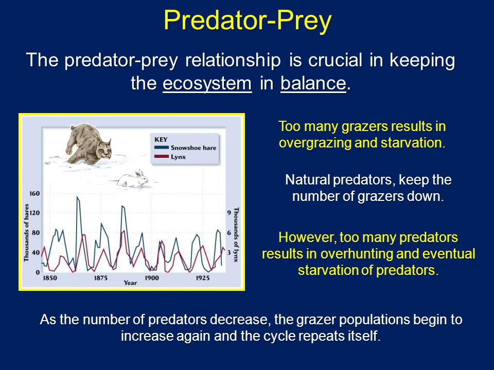 Predator-Prey The predator-prey relationship is crucial in keeping the ecosystem in balance. Too many grazers results in overgrazing and starvation. N