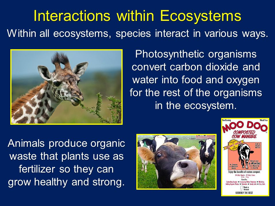 Within all ecosystems, species interact in various ways. Photosynthetic organisms convert carbon dioxide and water into food and oxygen for the rest o