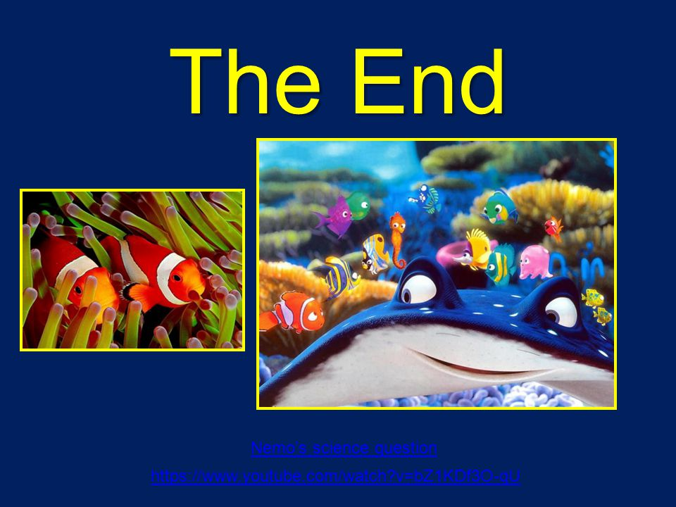 The End Nemo's science question https://www.youtube.com/watch?v=bZ1KDf3O-qU