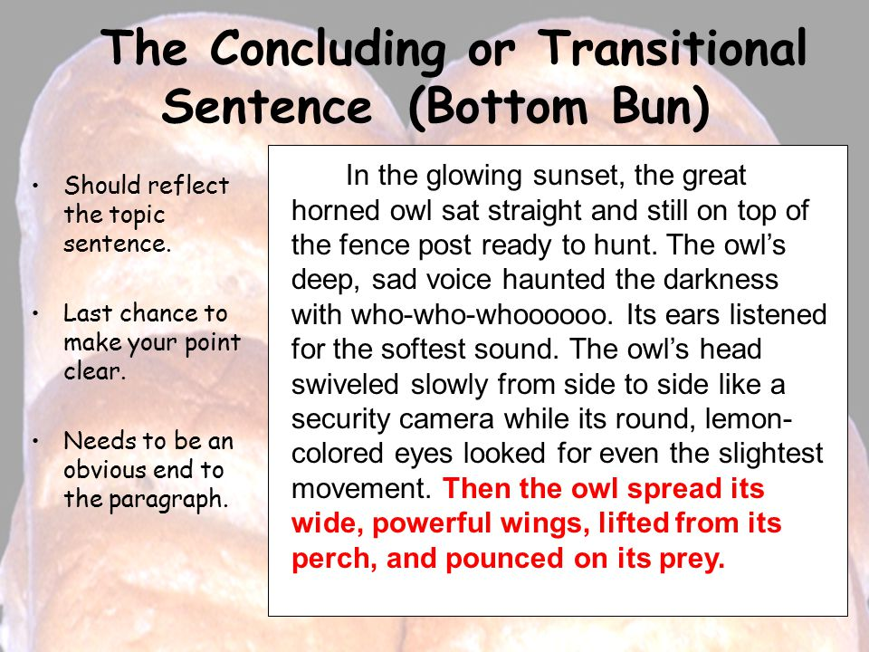The Concluding or Transitional Sentence (Bottom Bun) Should reflect the topic sentence.
