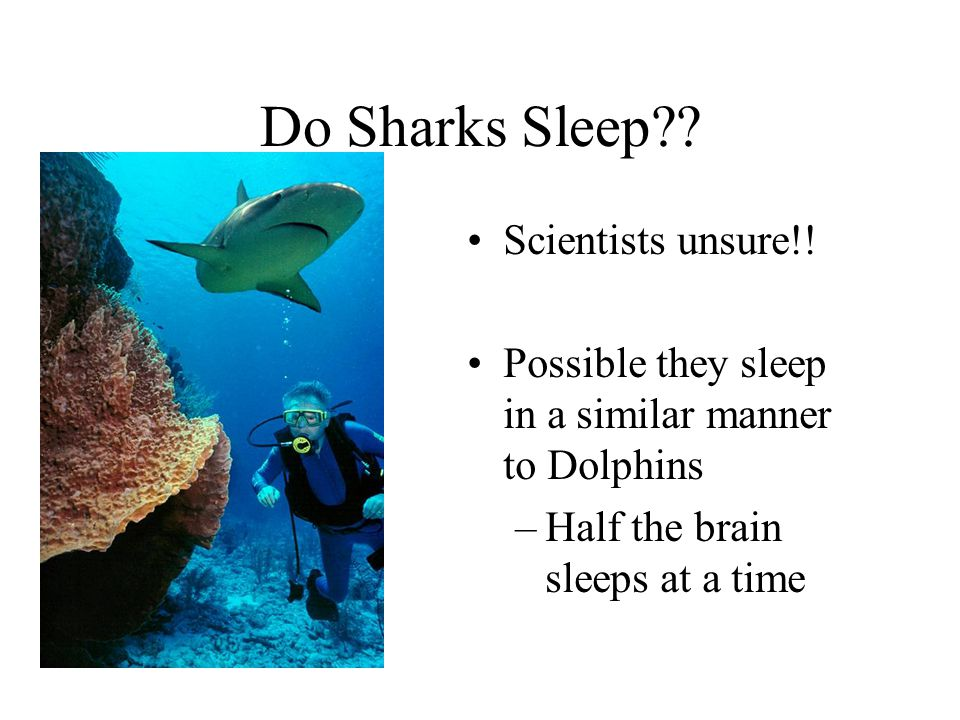 Do Sharks Sleep?.Scientists unsure!.