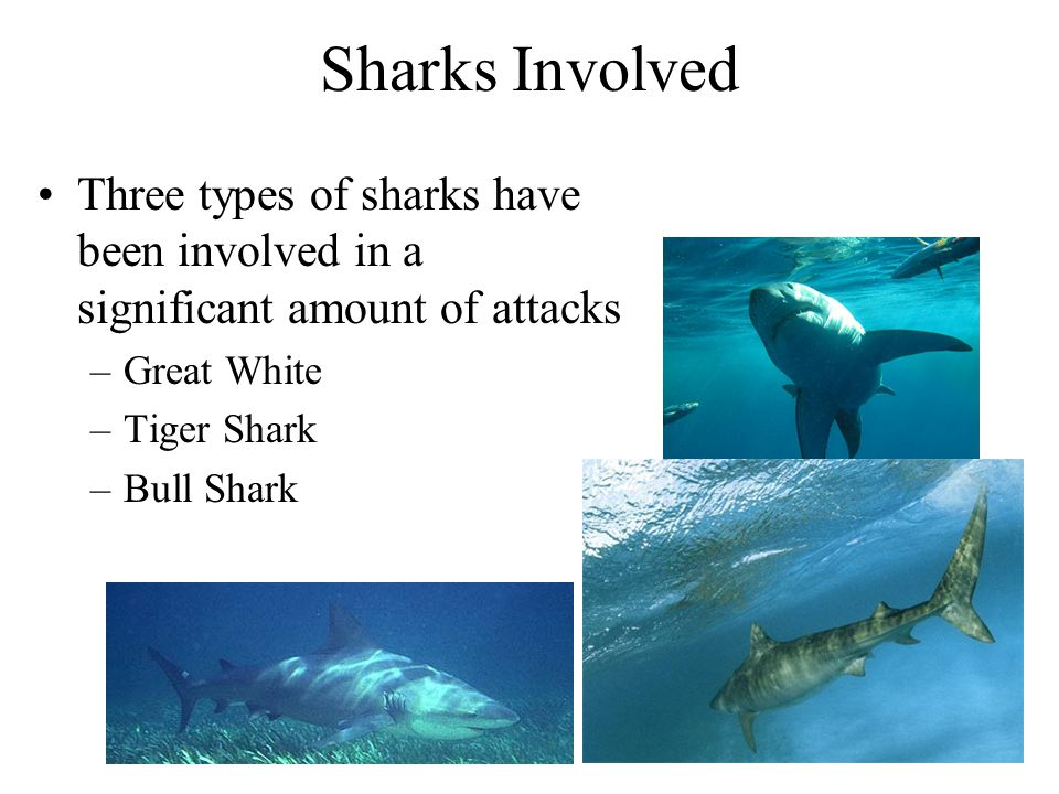 Sharks Involved Three types of sharks have been involved in a significant amount of attacks –Great White –Tiger Shark –Bull Shark