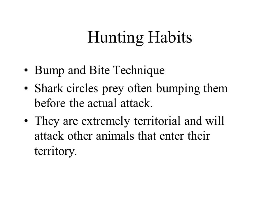 Hunting Habits Bump and Bite Technique Shark circles prey often bumping them before the actual attack.