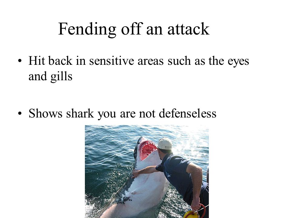 Fending off an attack Hit back in sensitive areas such as the eyes and gills Shows shark you are not defenseless