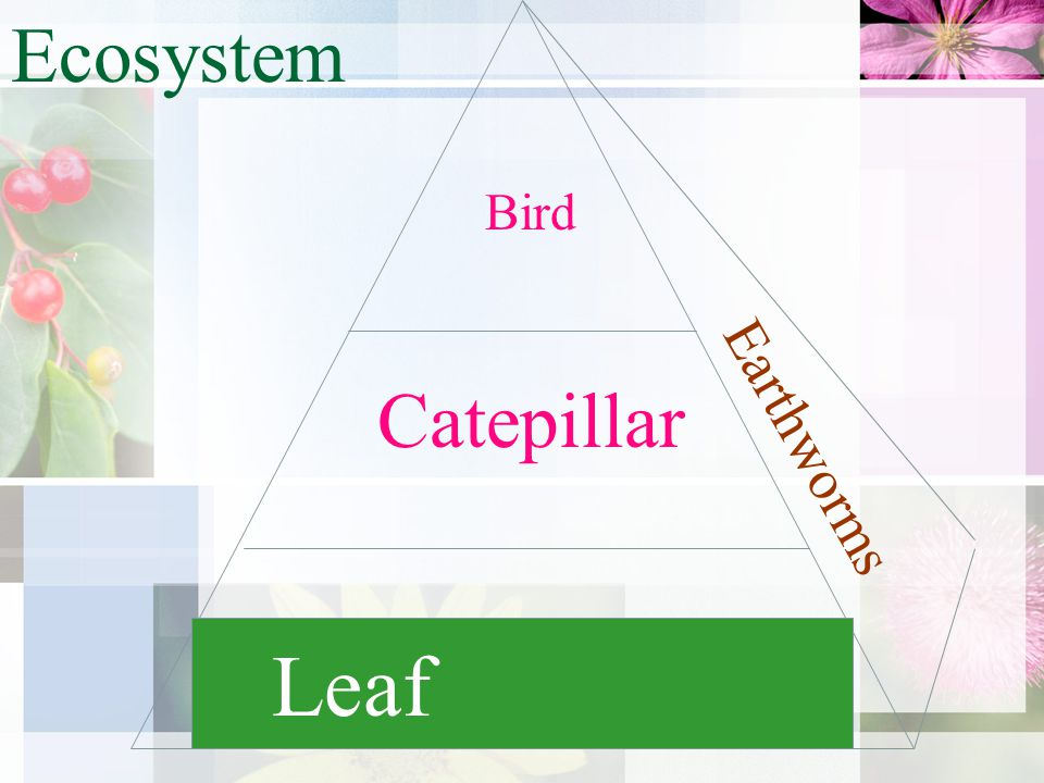 Leaf Catepillar Bird Ecosystem Earthworms