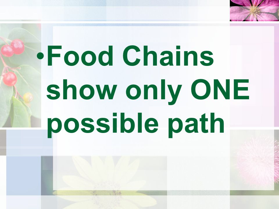 Food Chains show only ONE possible path