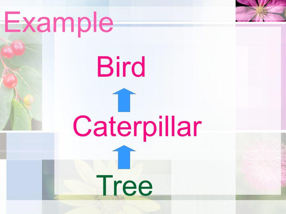 Example Tree Caterpillar Bird