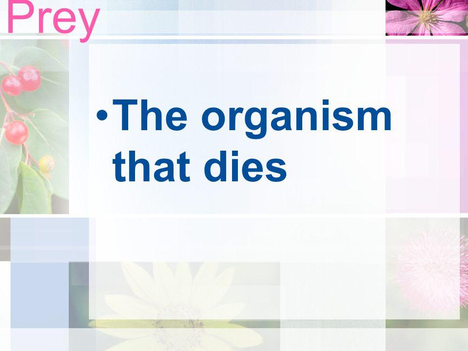 Prey The organism that dies