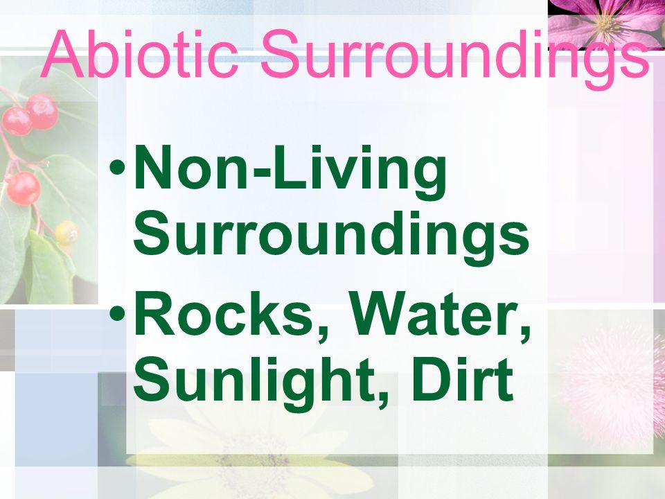 Abiotic Surroundings Non-Living Surroundings Rocks, Water, Sunlight, Dirt