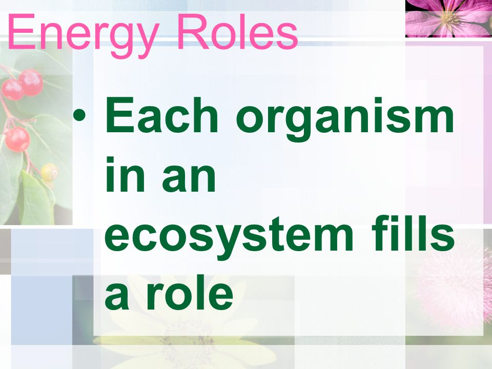 Energy Roles Each organism in an ecosystem fills a role