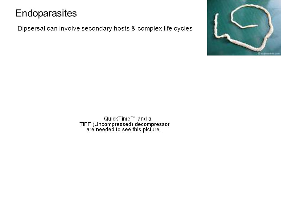 Endoparasites Dipsersal can involve secondary hosts & complex life cycles