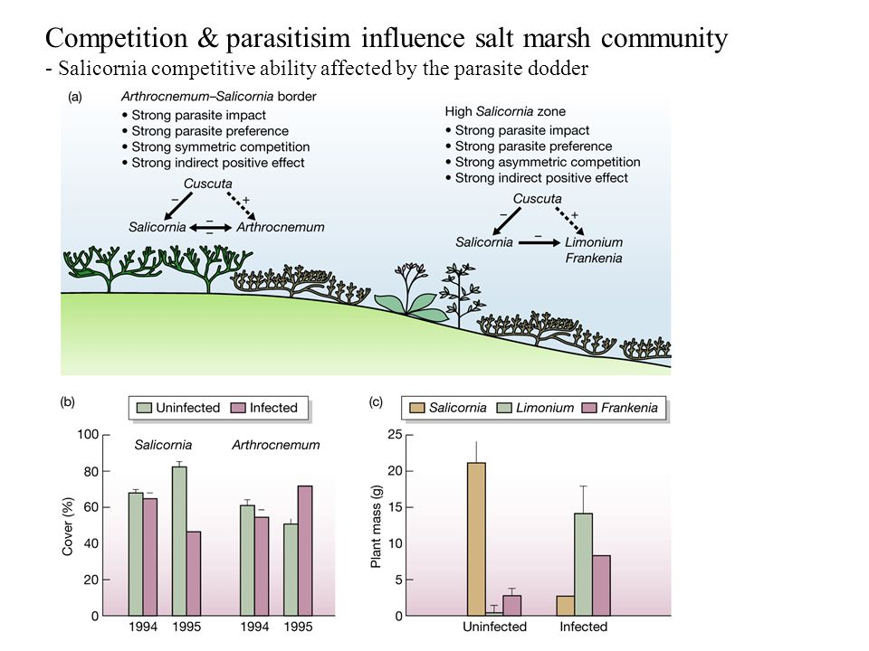 Competition & parasitisim influence salt marsh community - Salicornia competitive ability affected by the parasite dodder