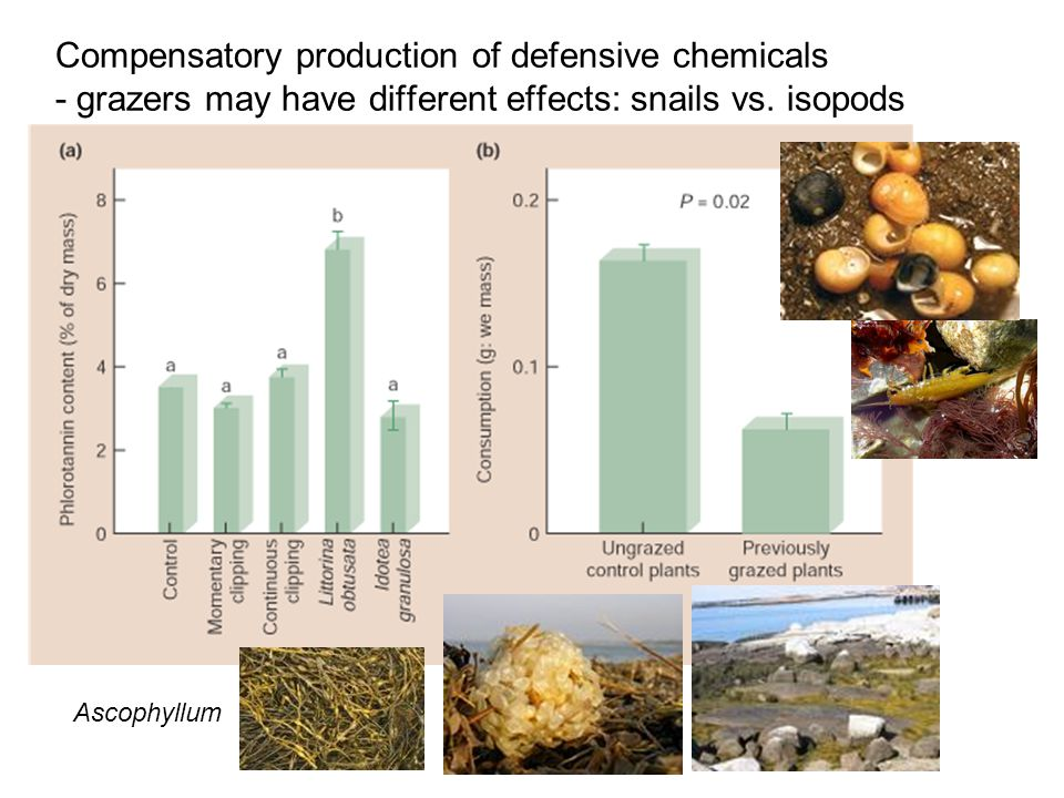 Compensatory production of defensive chemicals - grazers may have different effects: snails vs.