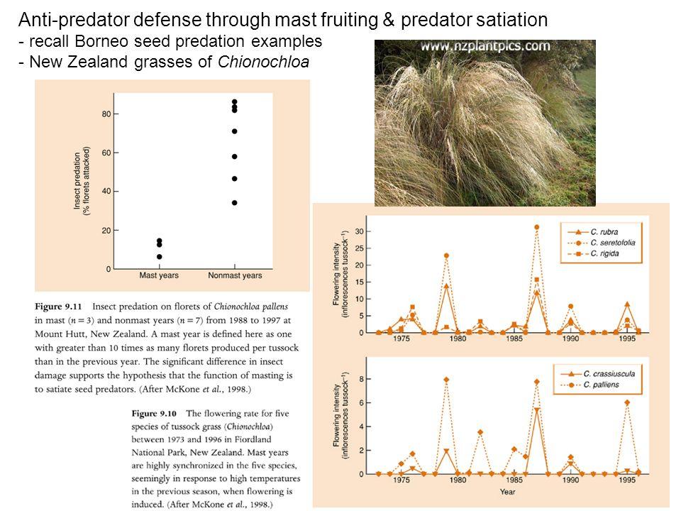 Anti-predator defense through mast fruiting & predator satiation - recall Borneo seed predation examples - New Zealand grasses of Chionochloa