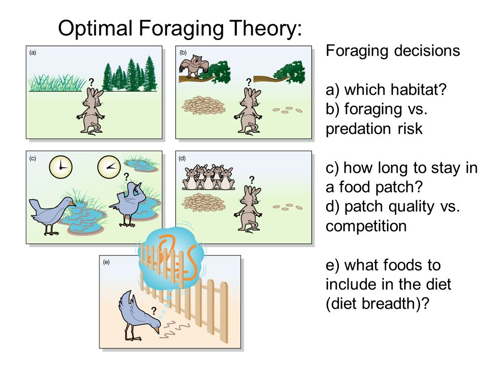 Foraging decisions a) which habitat. b) foraging vs.