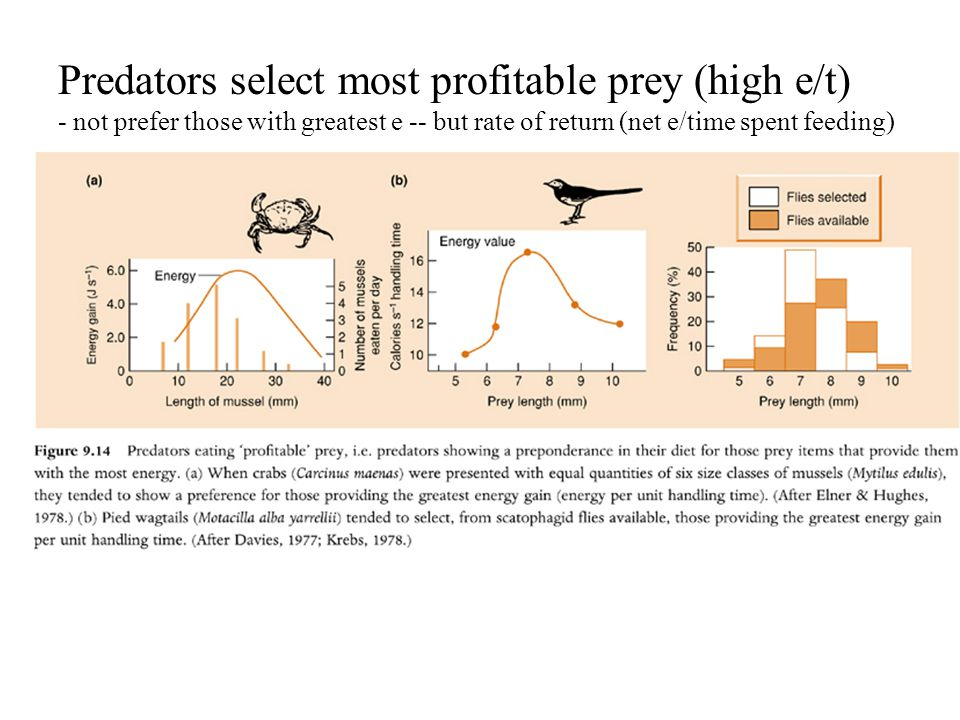 Predators select most profitable prey (high e/t) - not prefer those with greatest e -- but rate of return (net e/time spent feeding)