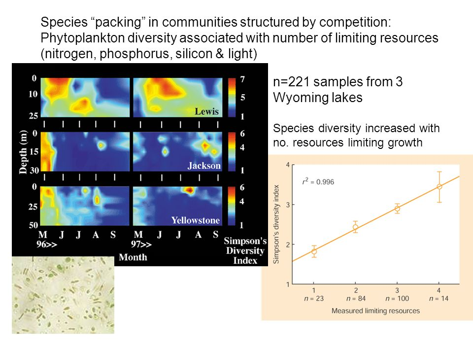 Species packing in communities structured by competition: Phytoplankton diversity associated with number of limiting resources (nitrogen, phosphorus, silicon & light) n=221 samples from 3 Wyoming lakes Species diversity increased with no.