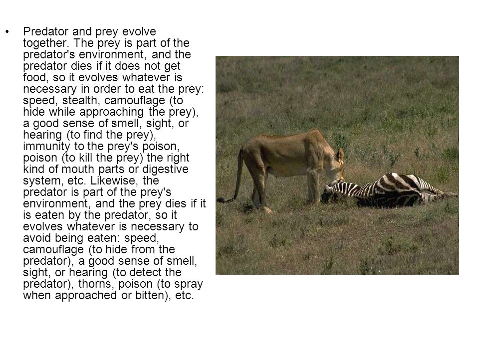 Predator and prey evolve together. The prey is part of the predator's environment, and the predator dies if it does not get food, so it evolves whatev