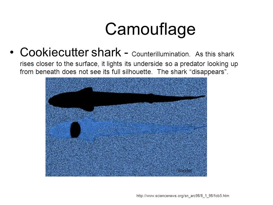 Camouflage Cookiecutter shark - Counterillumination. As this shark rises closer to the surface, it lights its underside so a predator looking up from