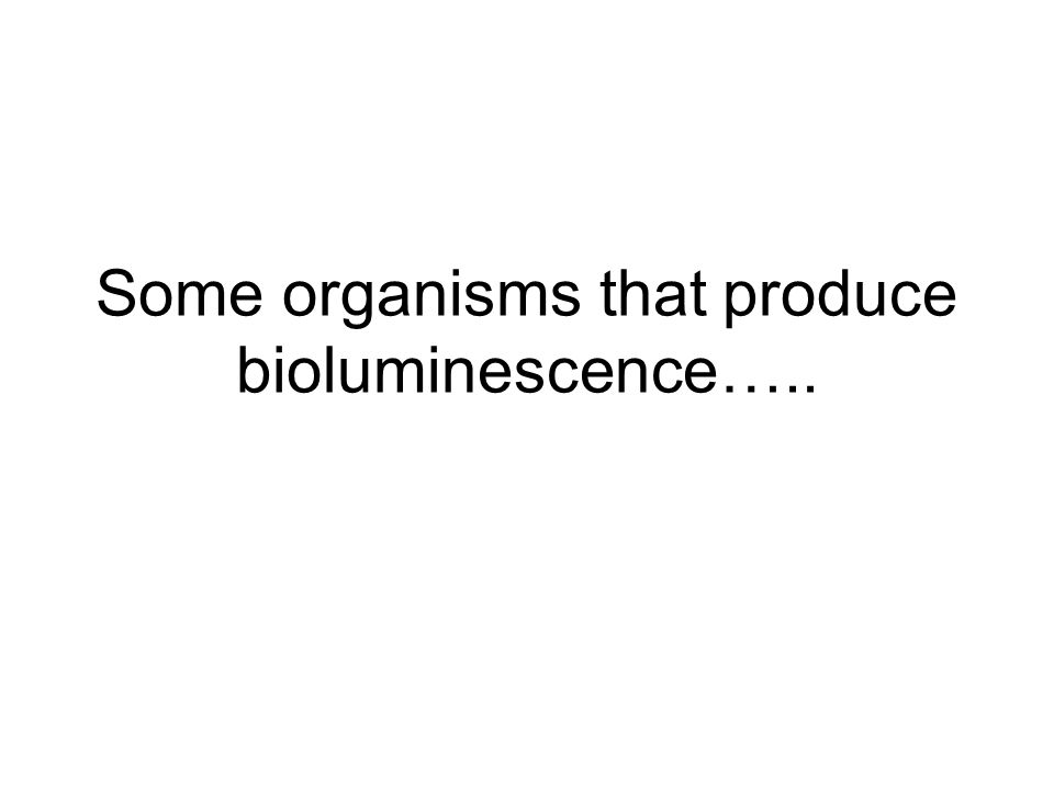 Some organisms that produce bioluminescence…..
