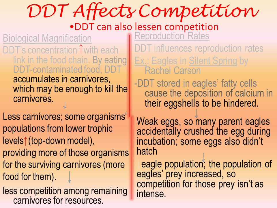 DDT Affects Competition DDT can increase competition  DDT may kill many organisms of a species that two other species compete for.