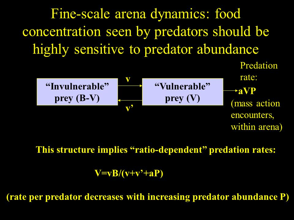 Fine-scale arena dynamics: food concentration seen by predators should be highly sensitive to predator abundance Invulnerable prey (B-V) Vulnerable prey (V) Predation rate: aVP (mass action encounters, within arena) This structure implies ratio-dependent predation rates: V=vB/(v+v'+aP) (rate per predator decreases with increasing predator abundance P) v v'