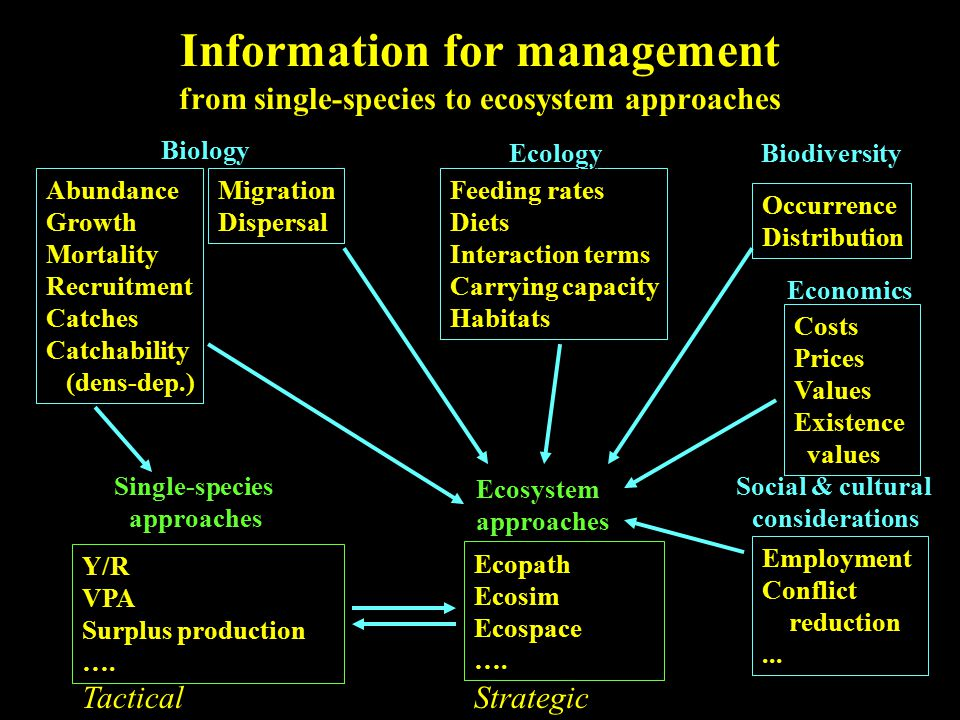 Information for management from single-species to ecosystem approaches Abundance Growth Mortality Recruitment Catches Catchability (dens-dep.) Abundance Growth Mortality Recruitment Catches Catchability (dens-dep.) Migration Dispersal Migration Dispersal Feeding rates Diets Interaction terms Carrying capacity Habitats Feeding rates Diets Interaction terms Carrying capacity Habitats Occurrence Distribution Occurrence Distribution Costs Prices Values Existence values Costs Prices Values Existence values Biology Ecology Biodiversity Economics Y/R VPA Surplus production ….