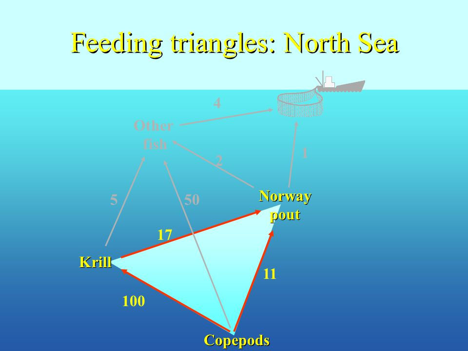 Feeding triangles: North Sea Other fish Krill Norway pout Copepods 4 1 505 17 100 11 2