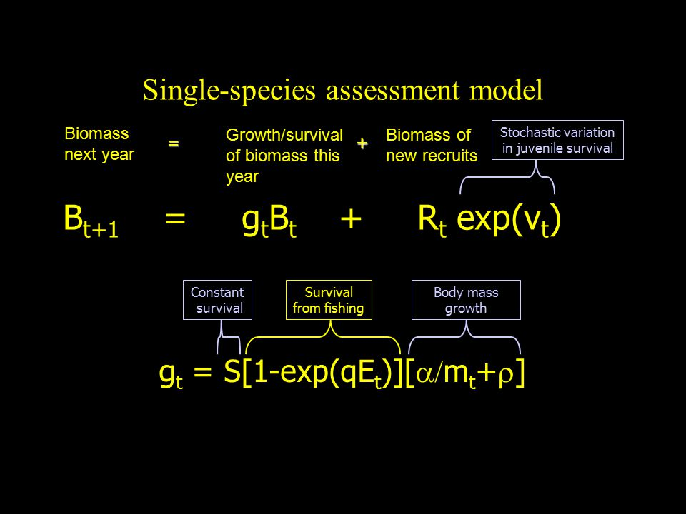 Single-species assessment model B t+1 = g t B t + R t exp(v t ) g t = S[1-exp(qE t )][  m t +  ] =+ Stochastic variation in juvenile survival Constant survival Survival from fishing Body mass growth Biomass next year Growth/survival of biomass this year Biomass of new recruits