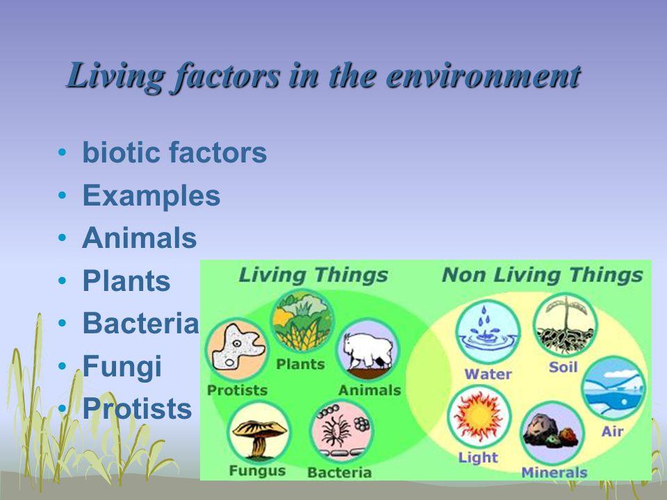 Living factors in the environment Living factors in the environment biotic factors Examples Animals Plants Bacteria Fungi Protists
