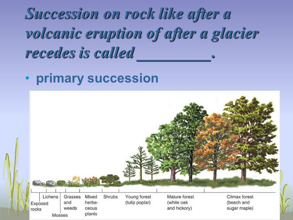 Succession on rock like after a volcanic eruption of after a glacier recedes is called _________. primary succession