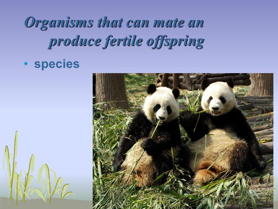 Organisms that can mate an produce fertile offspring species