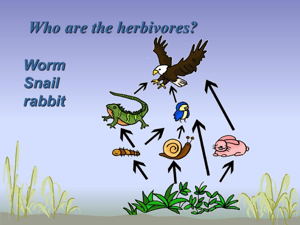 Who are the herbivores? WormSnailrabbit