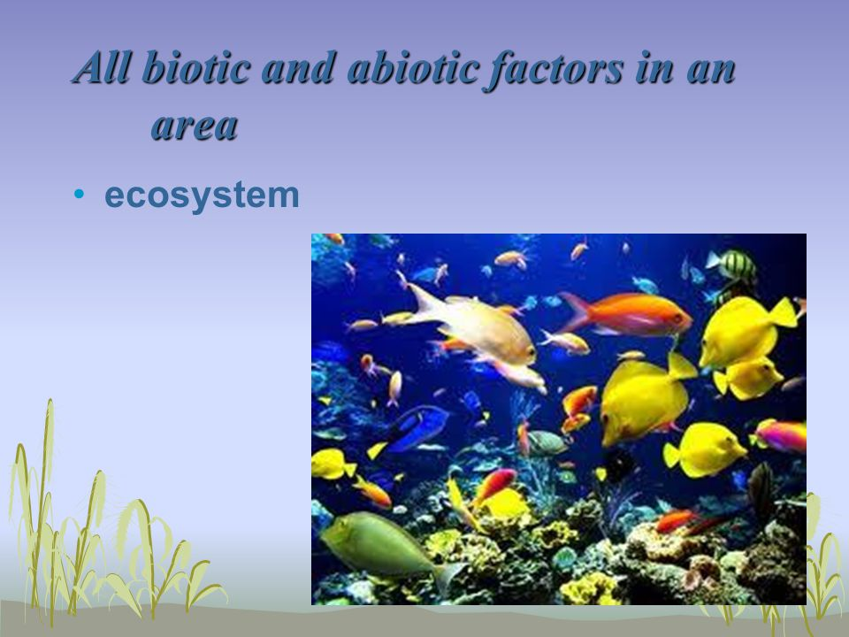 All biotic and abiotic factors in an area ecosystem