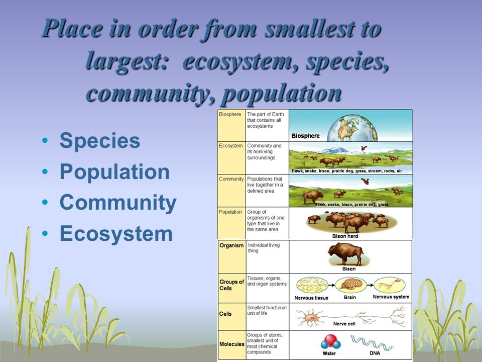 Place in order from smallest to largest: ecosystem, species, community, population Species Population Community Ecosystem