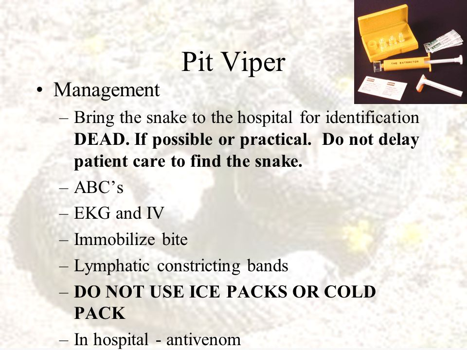 Pit Vipers Signs and Symptoms Fang Marks Swelling and pain at bite marks Oozing at bite Weakness, dizziness, or fainting Sweating and/or chills Thirst Nausea and Vomiting Diarrhea Tachycardia and hypotension Bloody urine and GI hemorrhage (late) Shallow Resp.