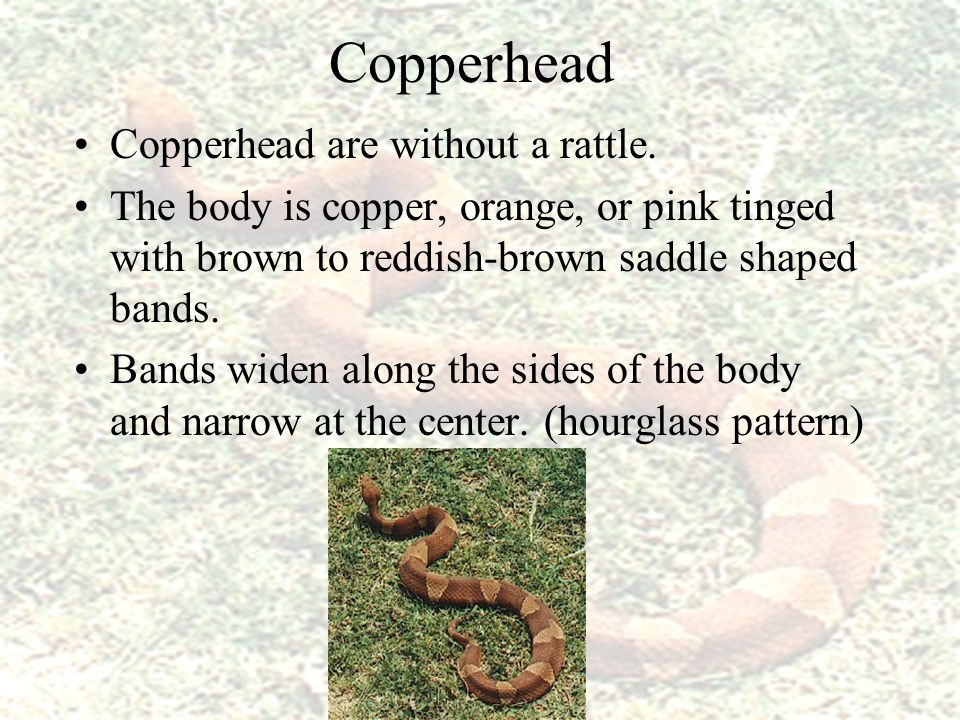 Copperhead If handled, they will spray a musk. It smells of cucumbers.