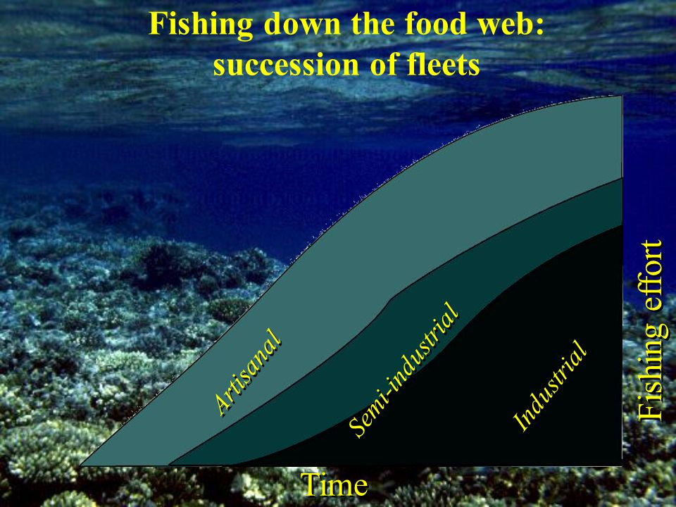 Artisanal Semi-industrial Industrial Time Fishing effort Fishing down the food web: succession of fleets