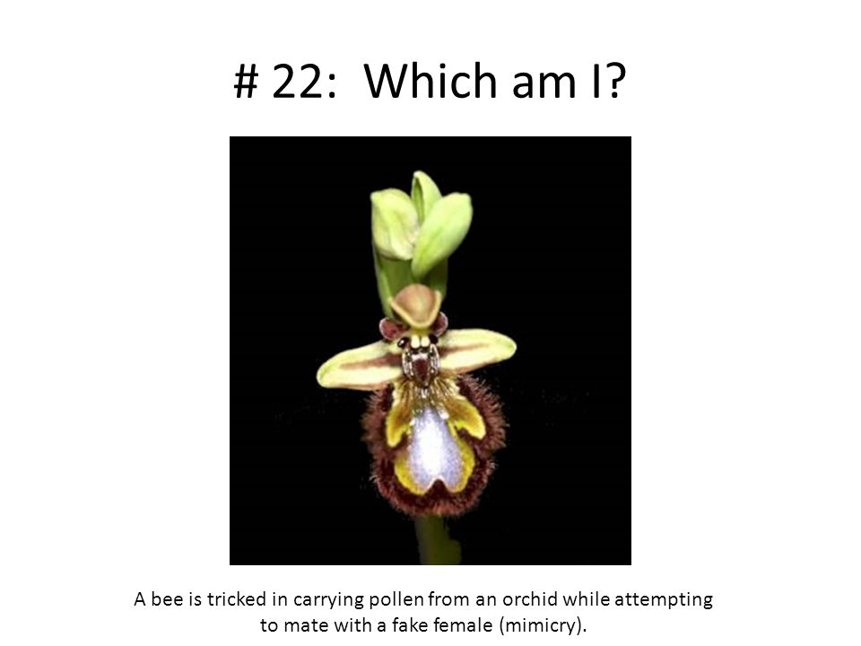 # 22: Which am I.