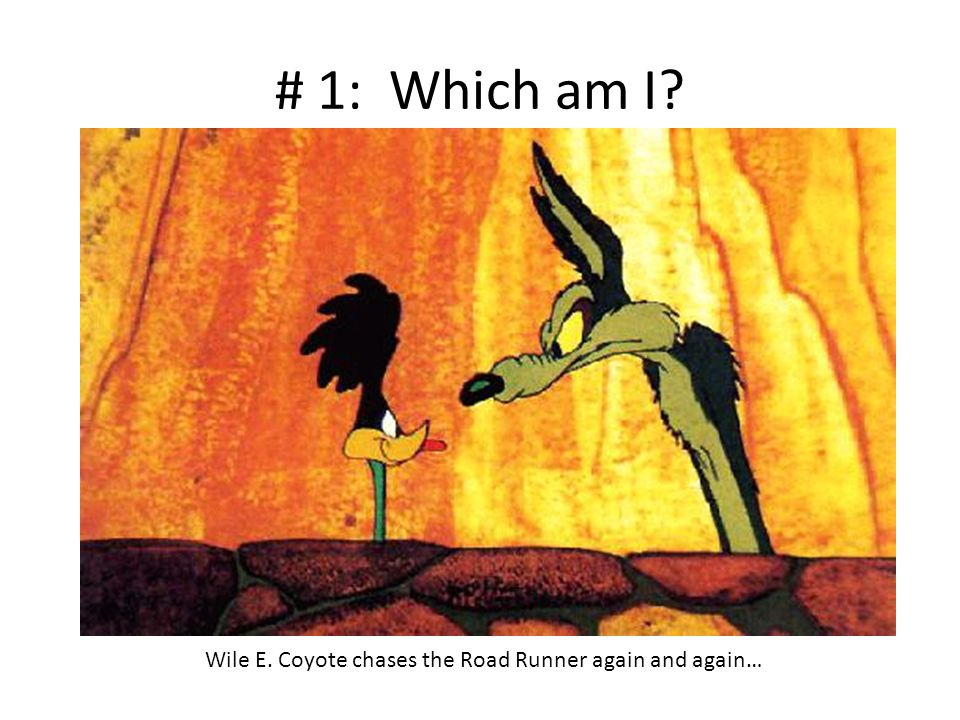 # 1: Which am I? Wile E. Coyote chases the Road Runner again and again…