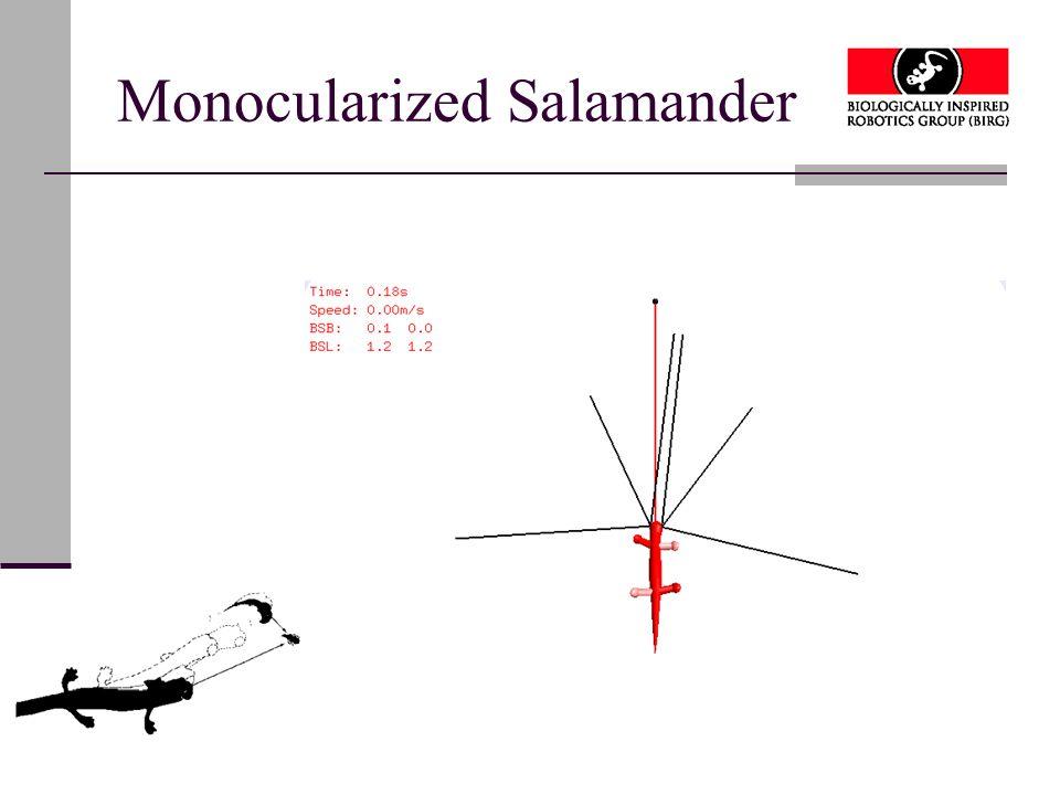 Monocularized Salamander